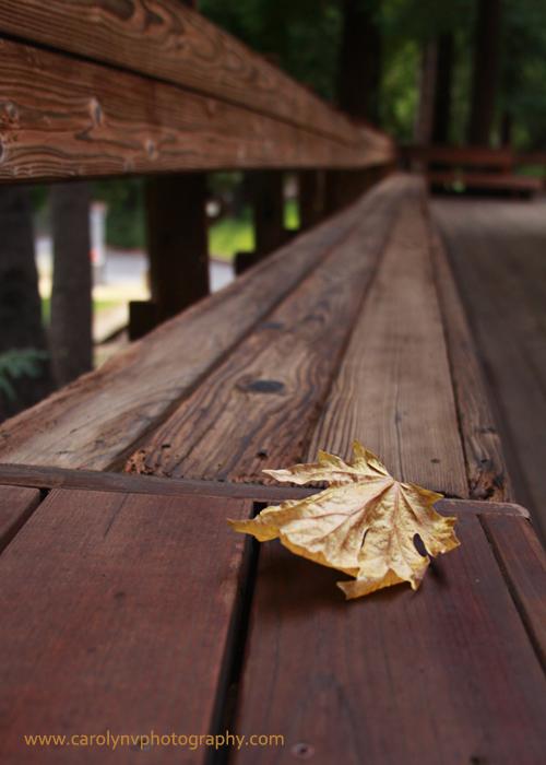 Fall at Koinonia sm