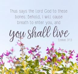 you-shall-live-sm